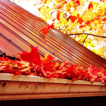 Leafs clogging gutters in a New York home.